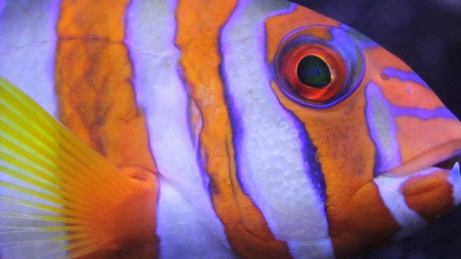 Tusken Fish